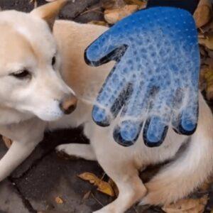 Doreze silikoni per pastrim te qimeve te kafsheve Grooming glove bli online porosit dyqantaxi