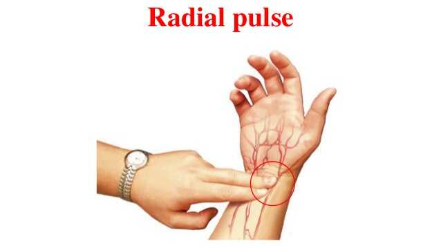 Radial Pulse heart